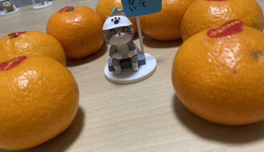 愛媛県出身だから、冬はみかんを箱買いなんよ